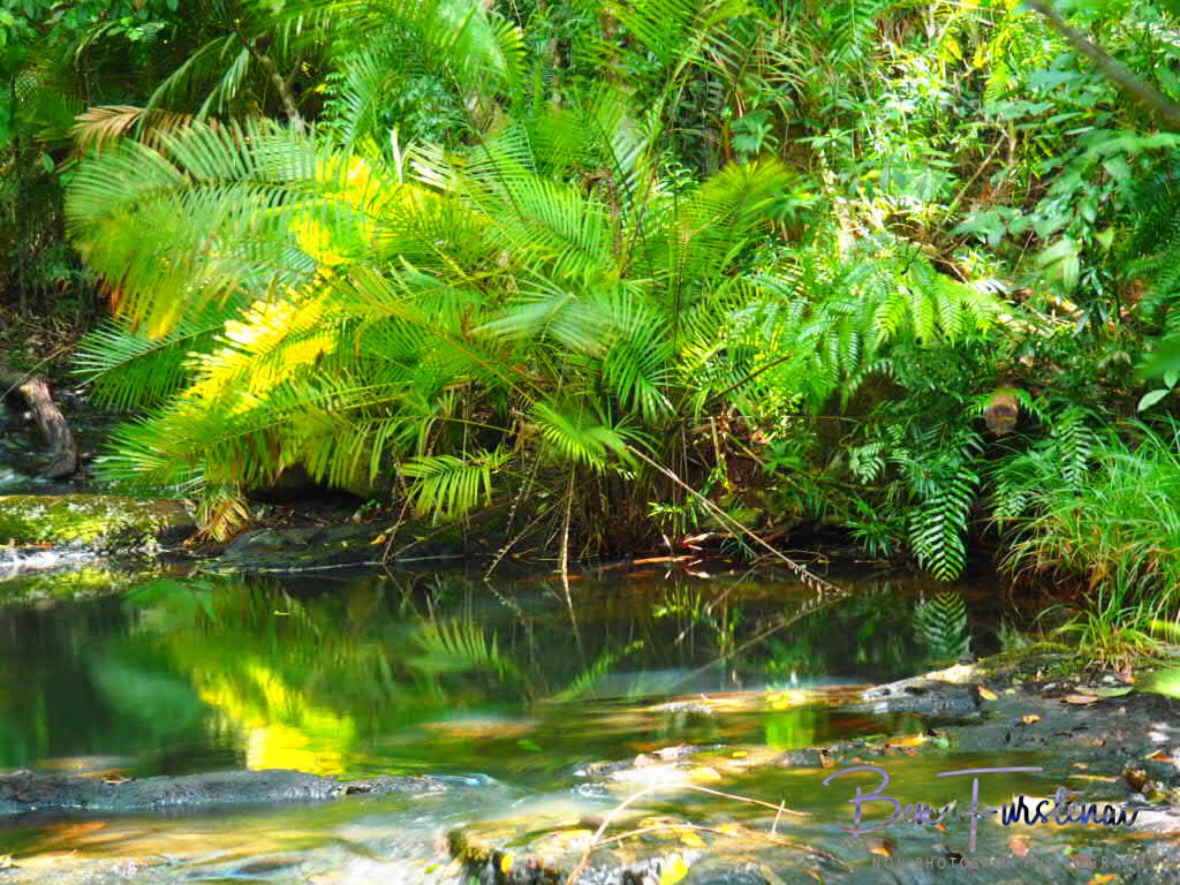 Fern reflections at Atherton Tablelands, Far North Queensland, Australia
