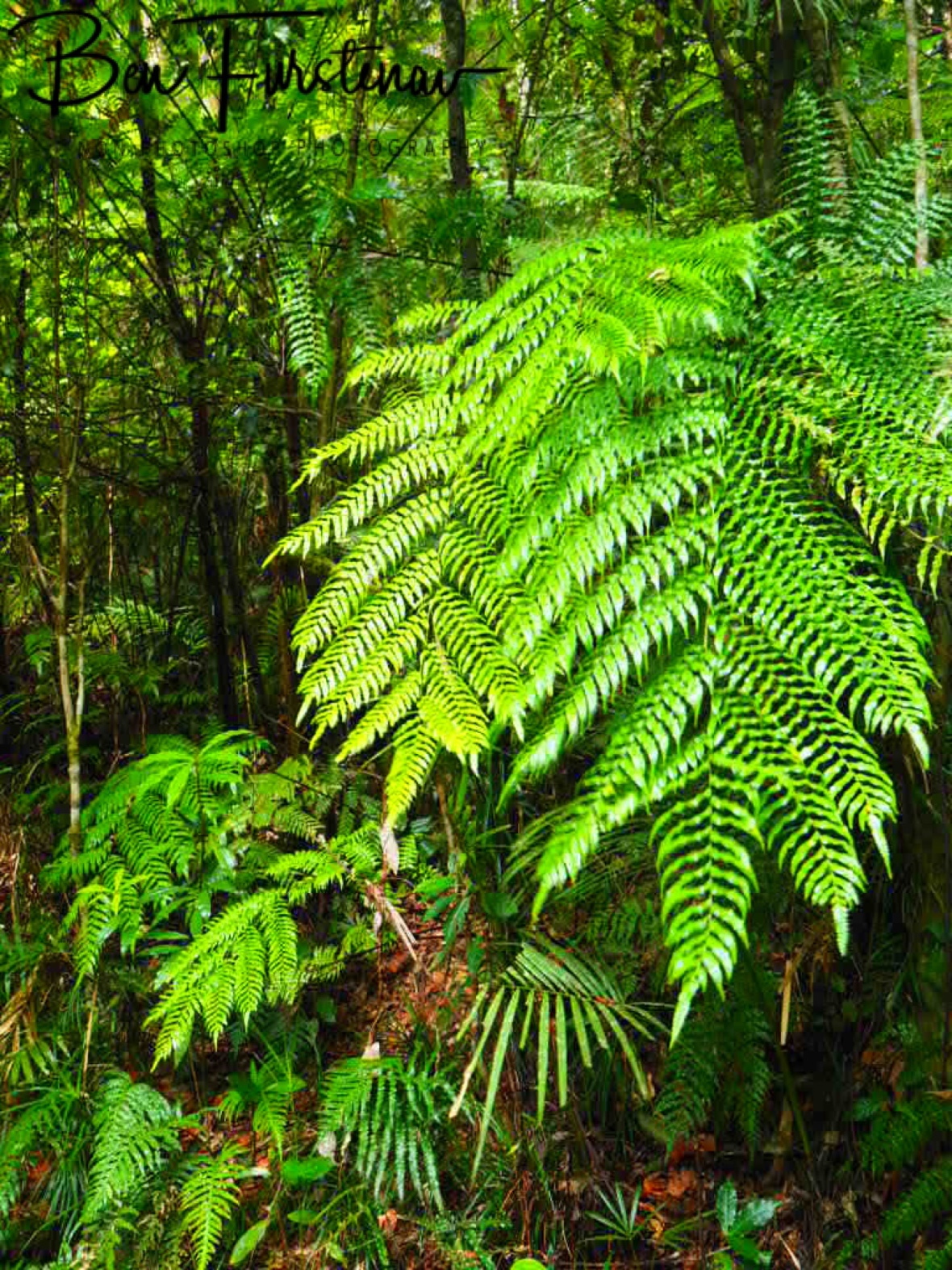 50 Shades of green at Atherton Tablelands, far North Queensland, Australia