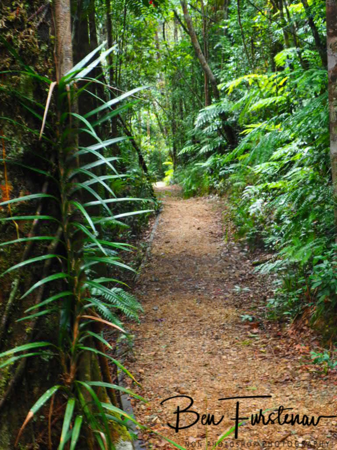Well maintained hiking trail at Atherton Tablelands, Far North Queensland, Australia