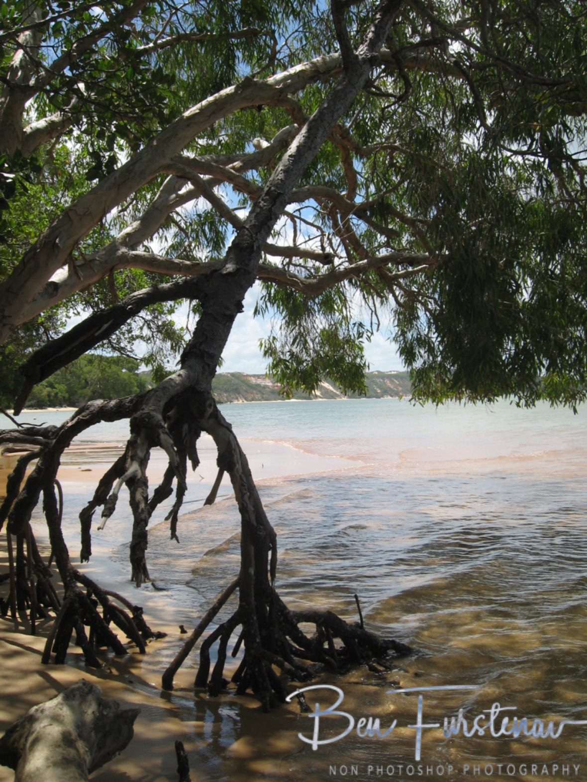 Mangrove Sanctuary at Elim Beach, Cape York Peninsula, Far North Queensland, Australia