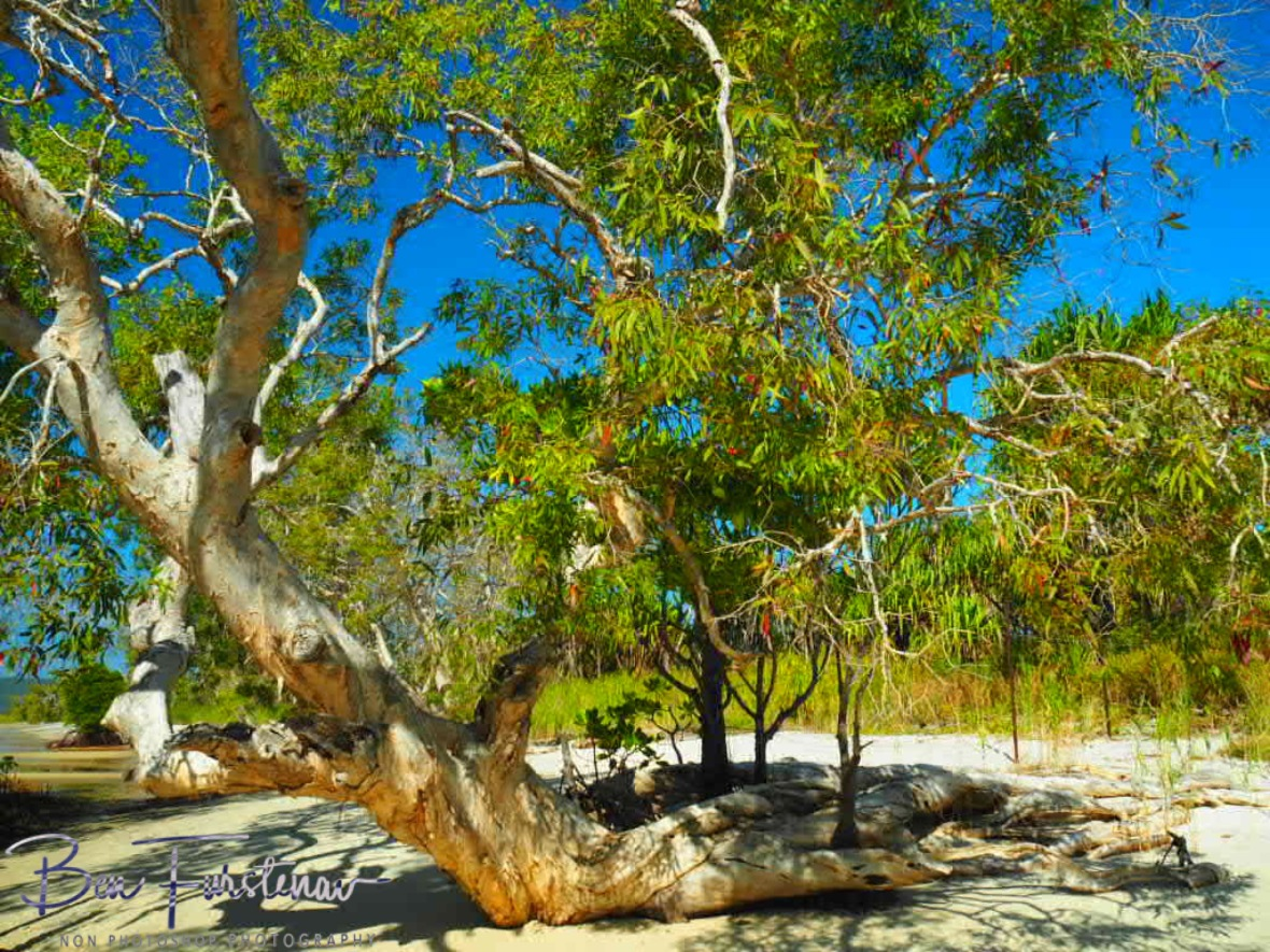 Fascinating beachfront at Elim Beach, Cape York Peninsula, Far North Queensland, Australia