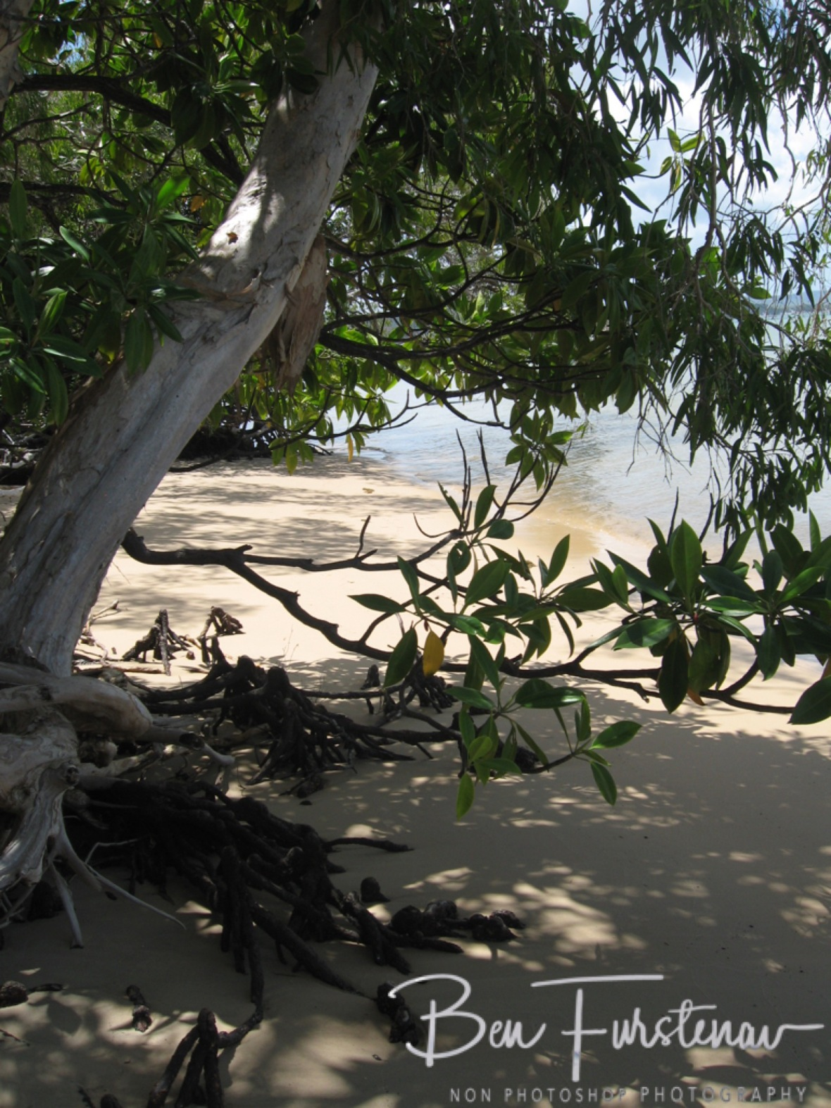 Important habitat for big and small at Elim Beach, Cape York Peninsula, Far North Queensland, Australia