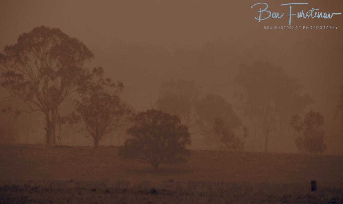 Smoke hazard in sepia, Australia, Northern New South Wales, Ulmara