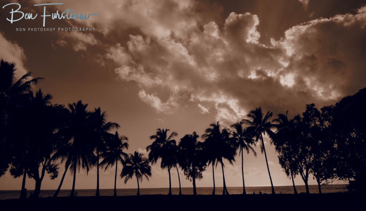 Palm tree line up at Port Douglas, Tropical Queensland, Australia