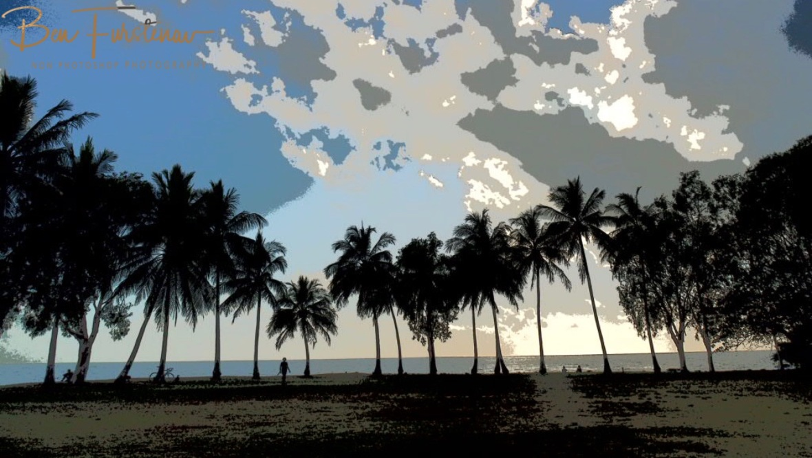Palm tree lining the waterfront at Port Douglas, Tropical Queensland, Australia