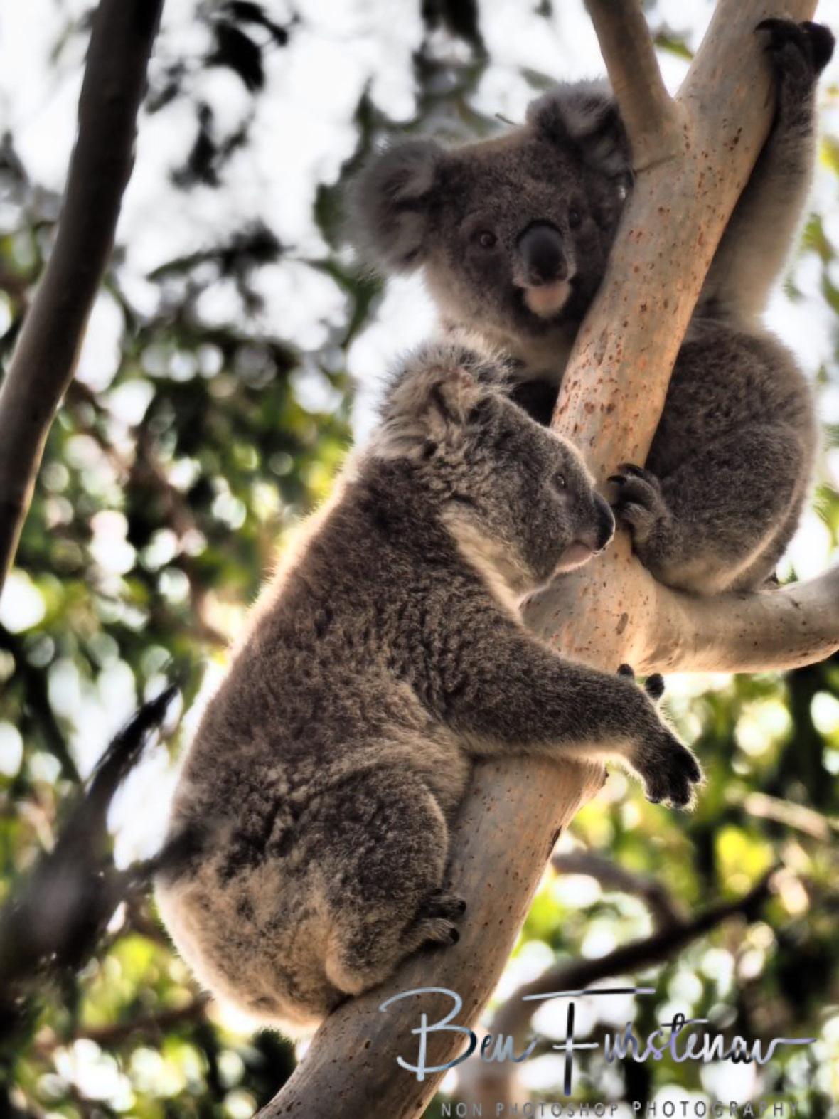 So cute at Woodburn, Northern New South Wales, Australia