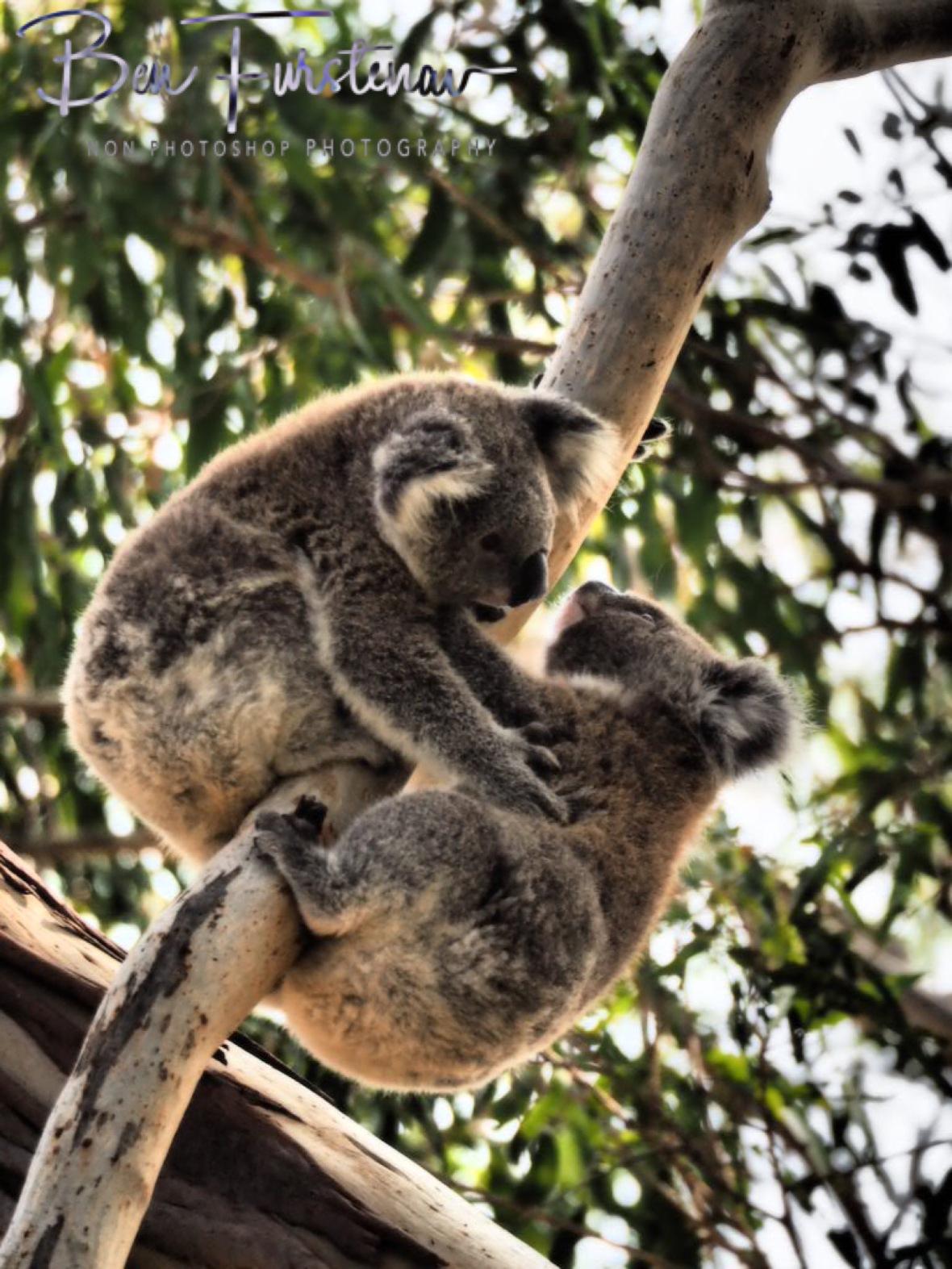 Helping paws at Woodburn, Northern New South Wales, Australia