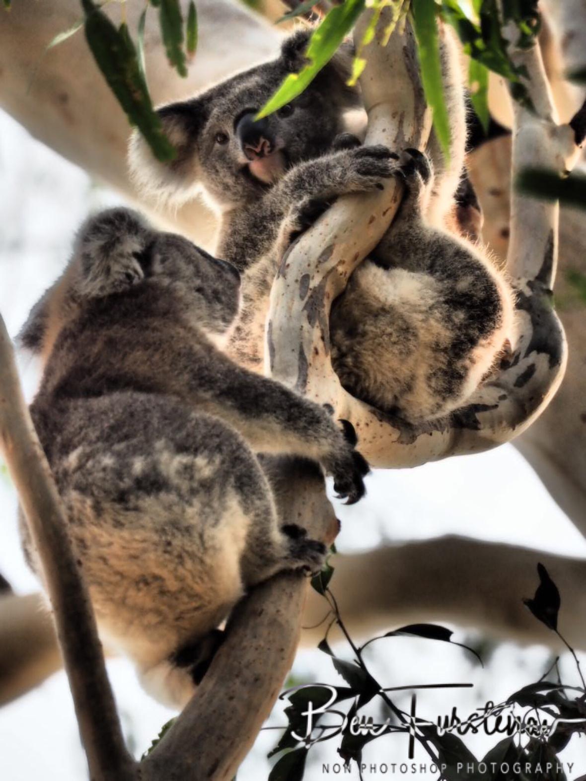 Happy reunion at Woodburn, Northern New South Wales, Australia