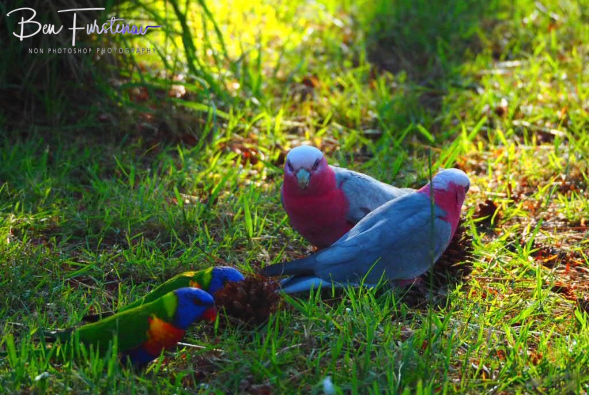 Social and colourful  un-distancing  at Evans Head, Northern New South Wales, Australia