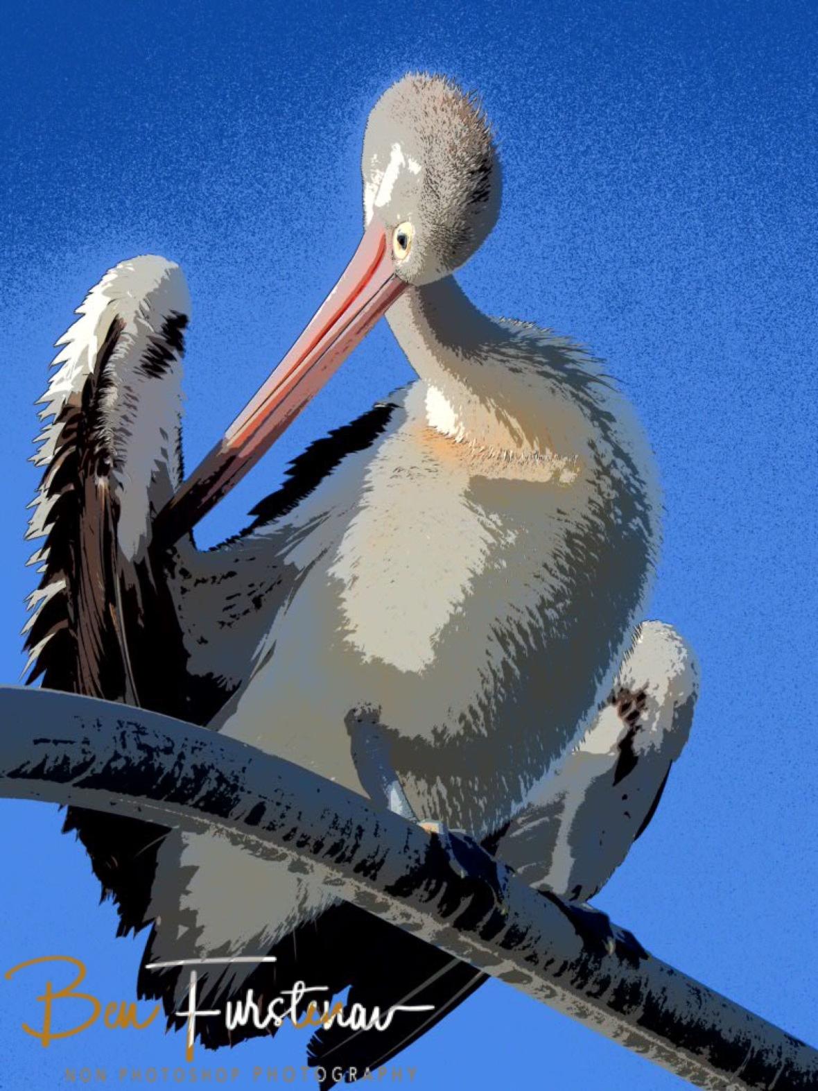 Neck-bending antics at Evans Head, Northern New South Wales, Australia