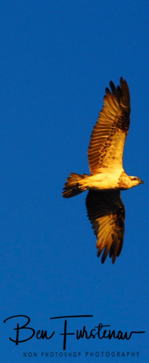 Hawk eye over Evans Head, Northern New South Wales, Australia