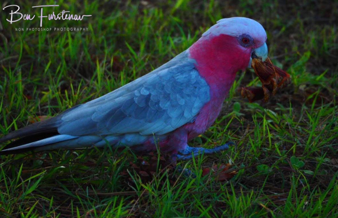 50 shades of pink at Evans Head, Northern New South Wales, Australia