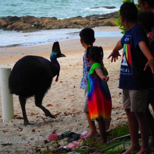 No fruit loops here @ Etti Bay, Tropical Northern Queensland, Australia