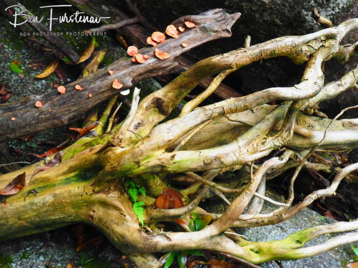 Natural art at Babinda, Tropical Northern Queensland, Australia