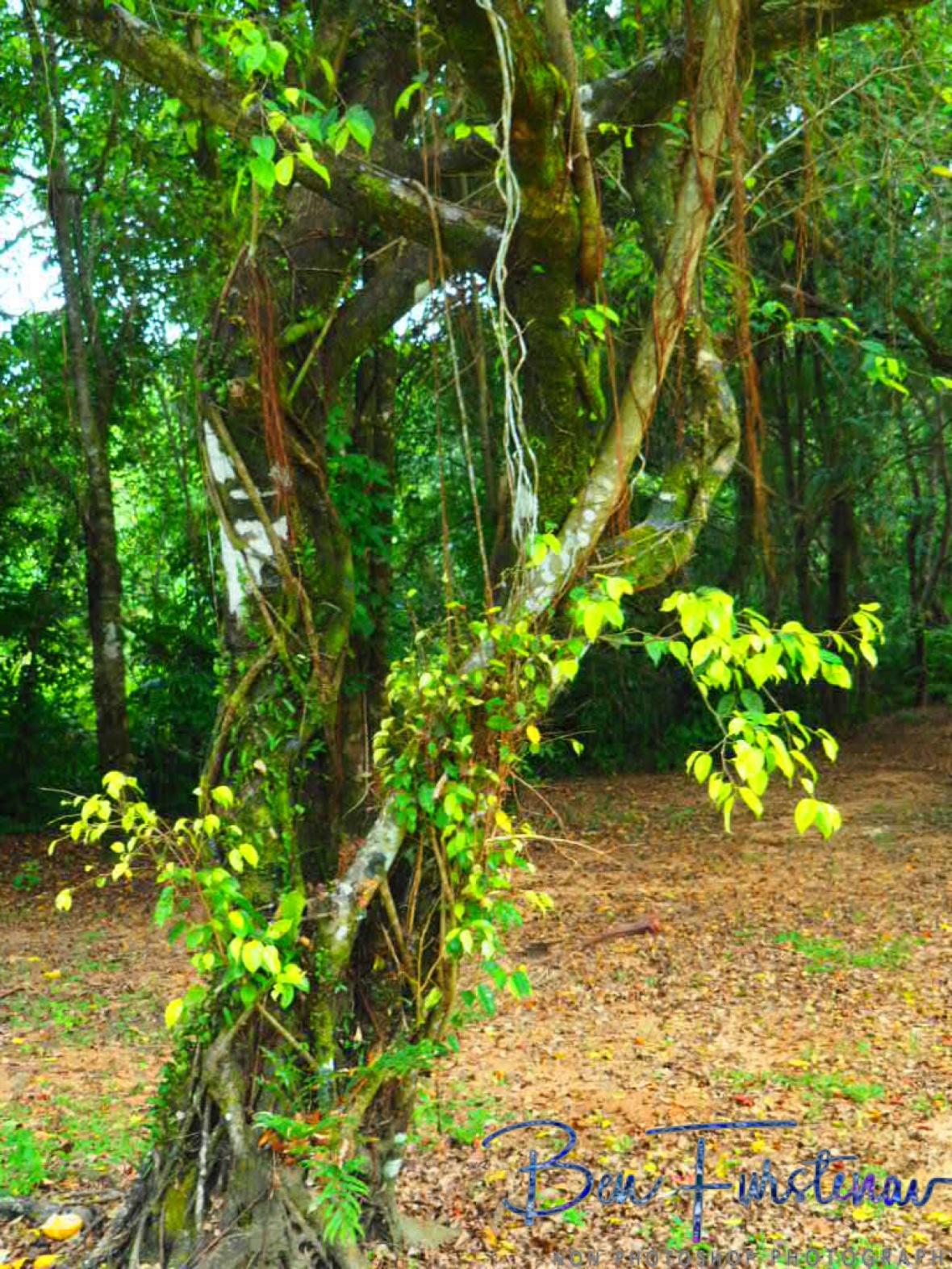 Camping area not far at Babinda, Tropical Northern Queensland, Australia