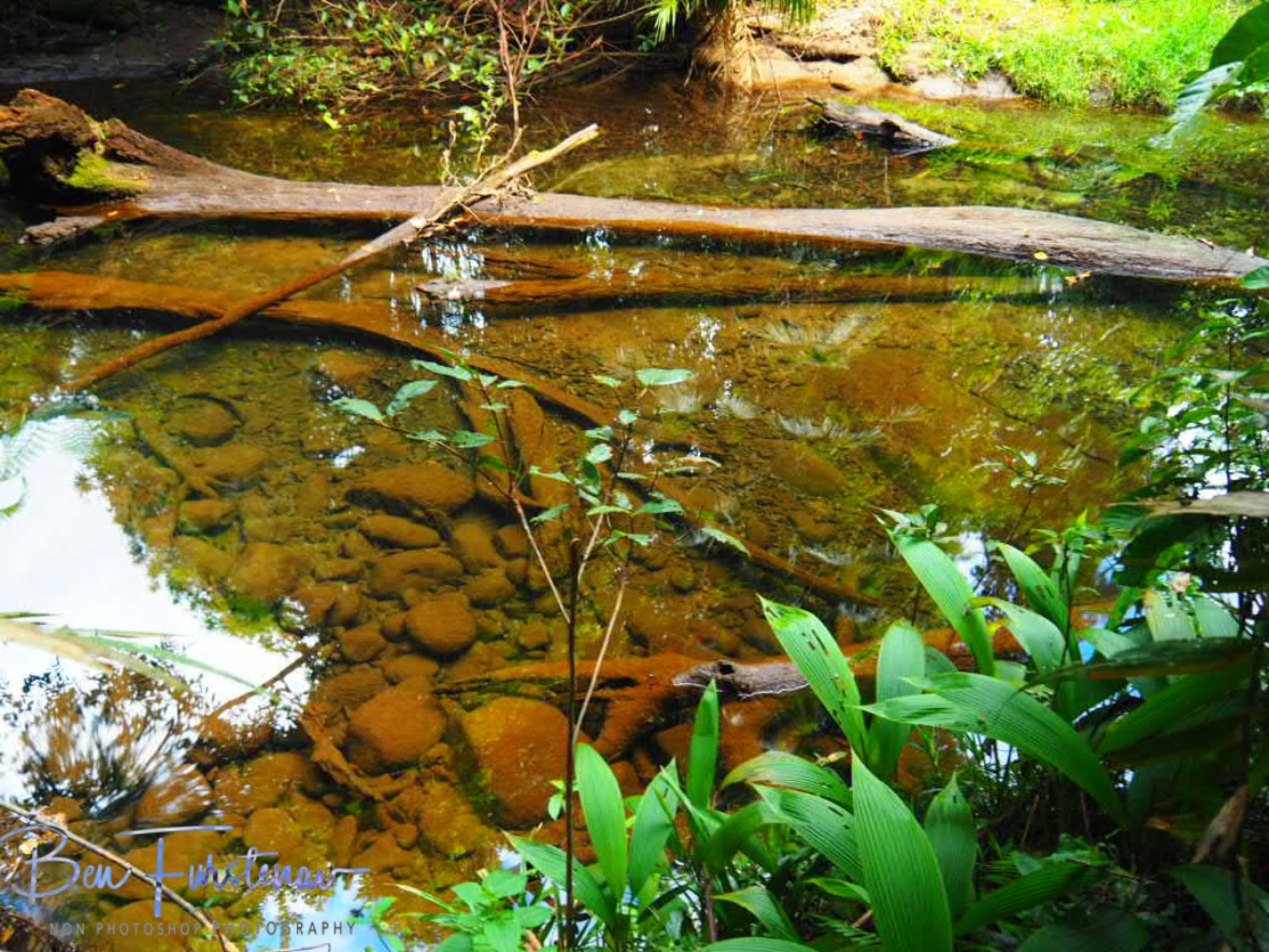 Stagnant clear waters at Babinda, Tropical Northern Queensland, Australia