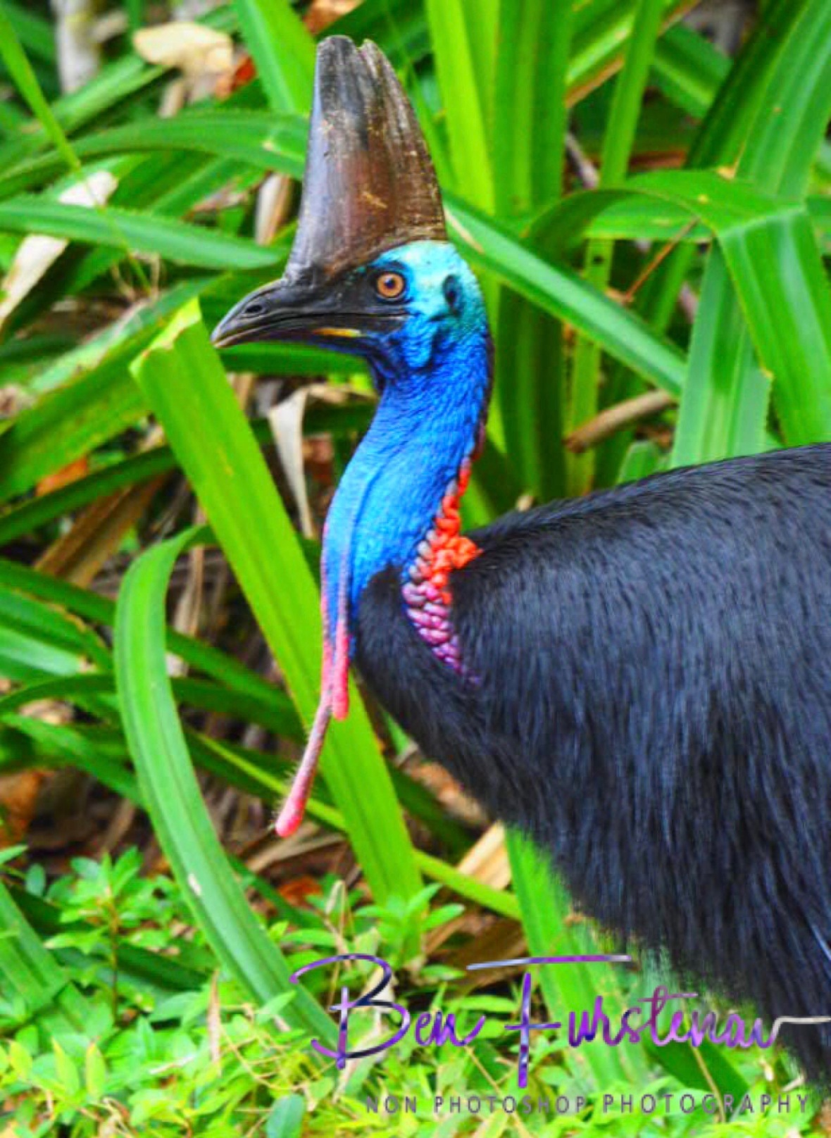 Desperate measures for desperate times @ Etti Bay, Northern Tropical Queensland, Australia