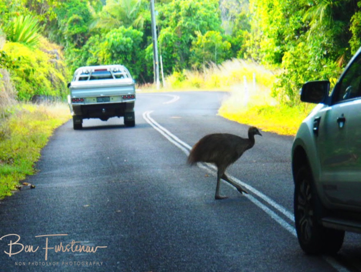 How about a traffic jam? @ Etti Bay, Tropical Northern Queensland, Australia