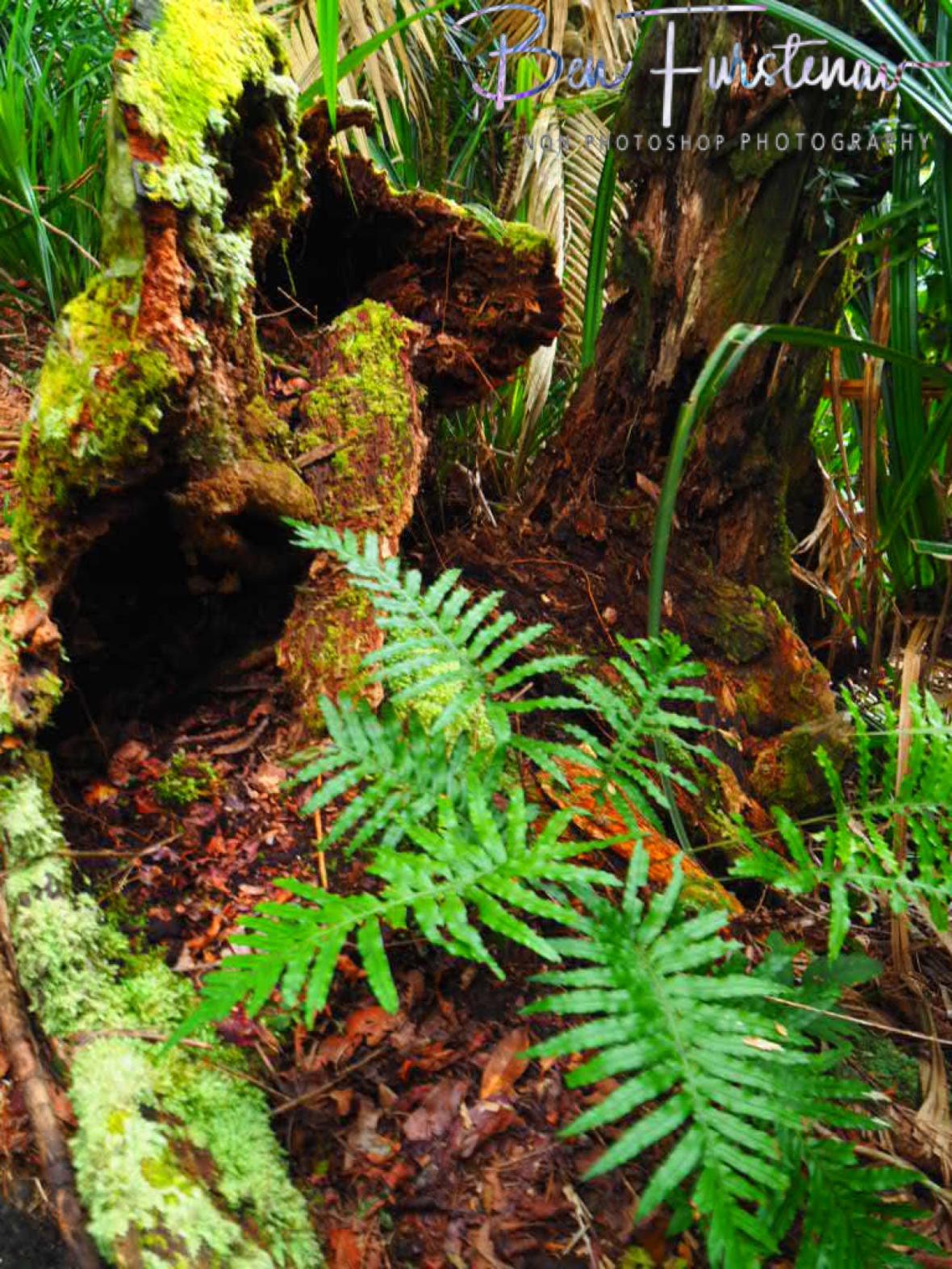 Forest housing at Babinda, Tropical Northern Queensland, Australia