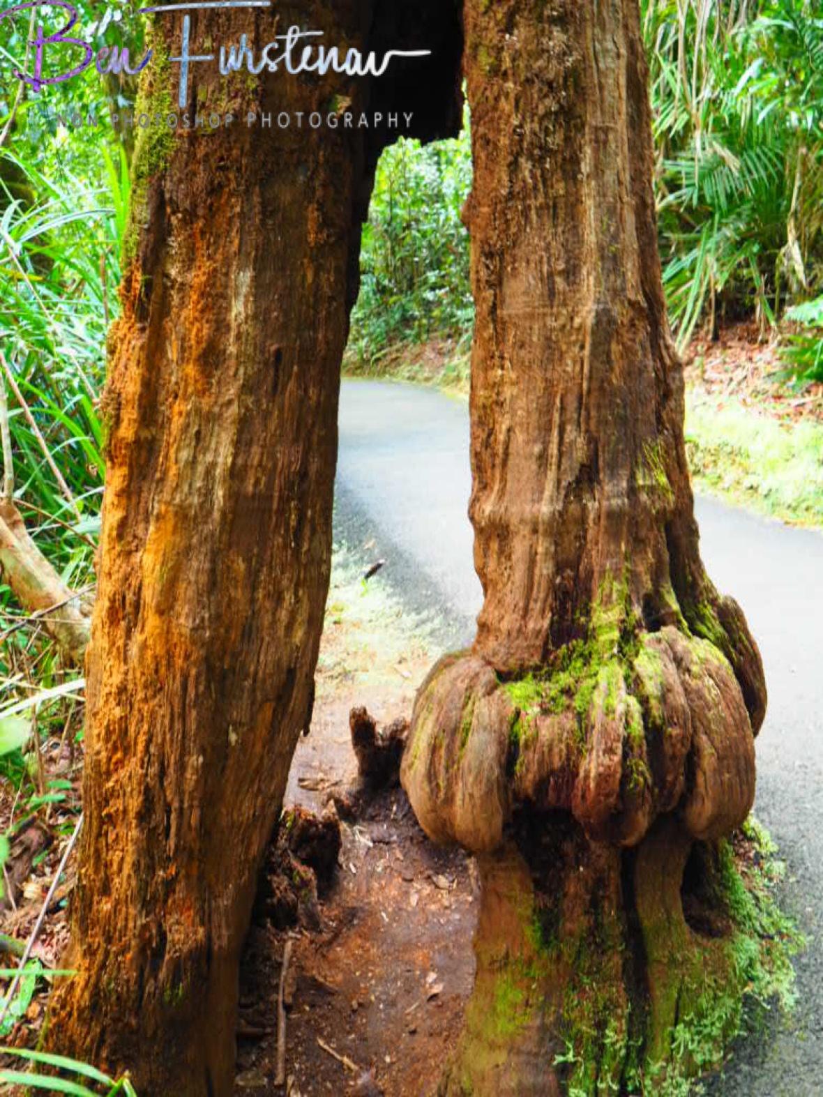 Giant footsteps at Babinda, Tropical Northern Queensland, Australia