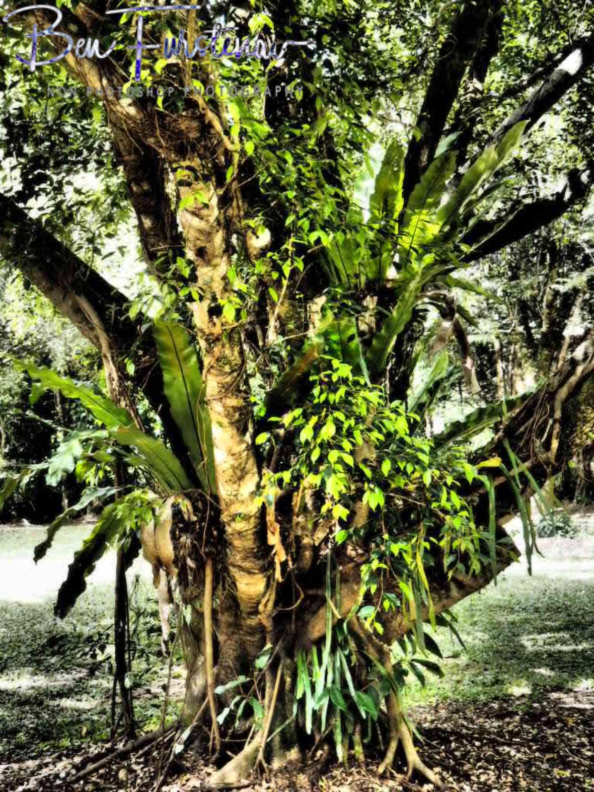 Natural life support at Babinda, Tropical Northern Queensland, Australia