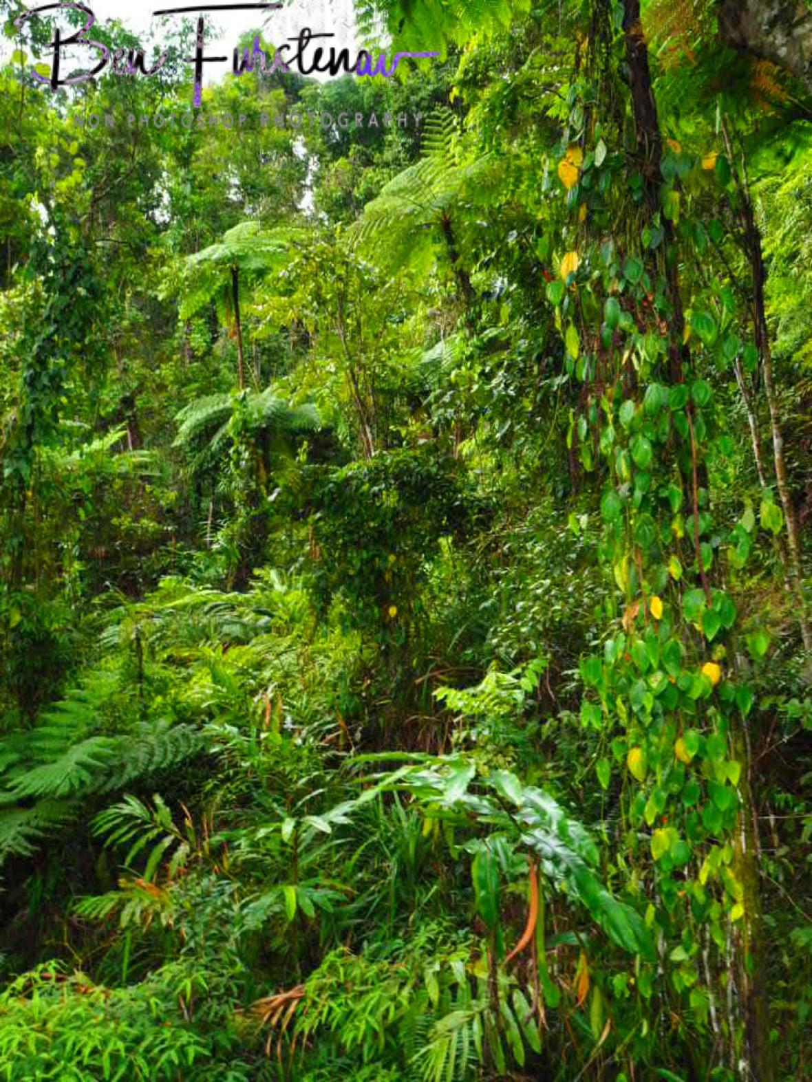 50 shades of green at Babinda, Tropical Northern Queensland, Australia