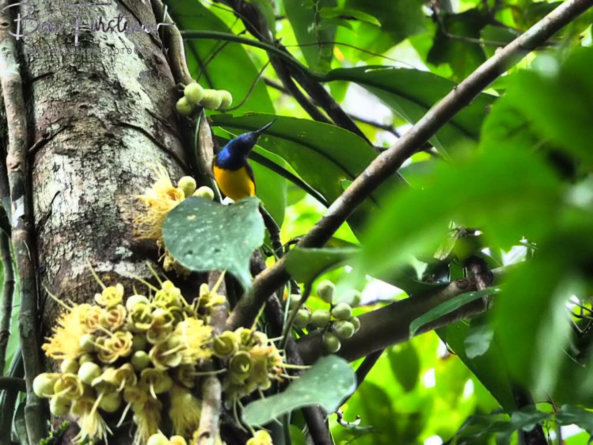 Colourful surprises at Babinda, Tropical Northern Queensland, Australia