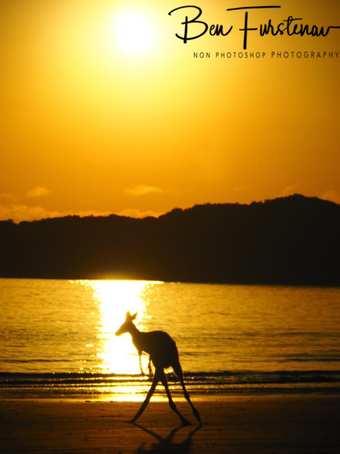 Spectacular move @ Cape Hillsborough, Tropical Northern Tropical, Australia