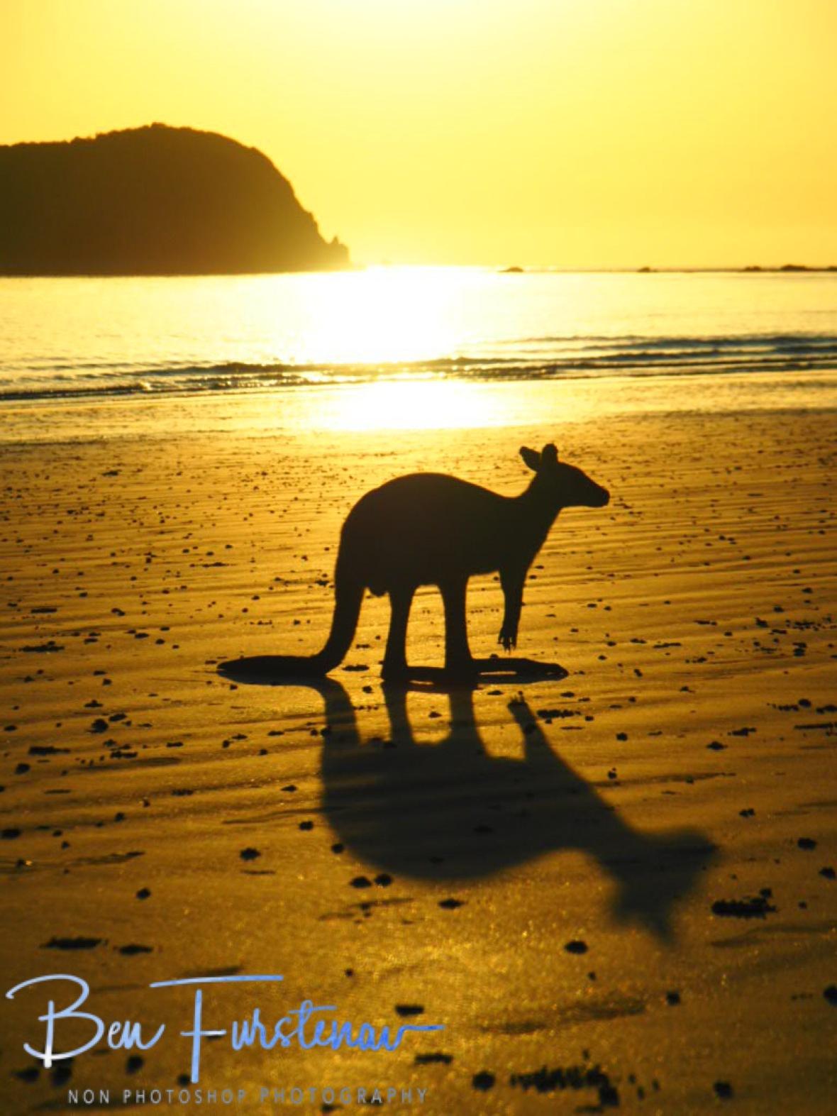 A deer? @ Cape Hillsborough, Tropical Northern Tropical, Australia