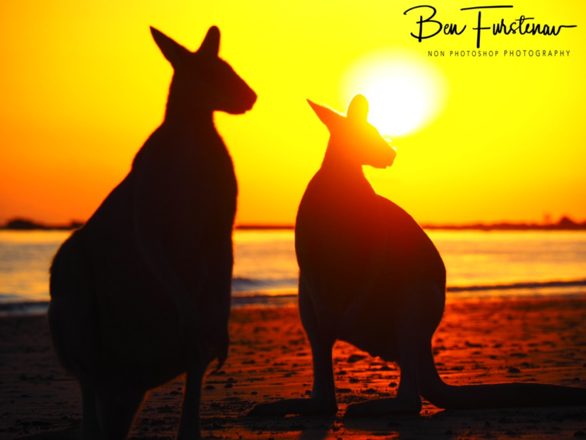Good morning sunshine @ Cape Hillsborough, Tropical Northern Queensland, Australia