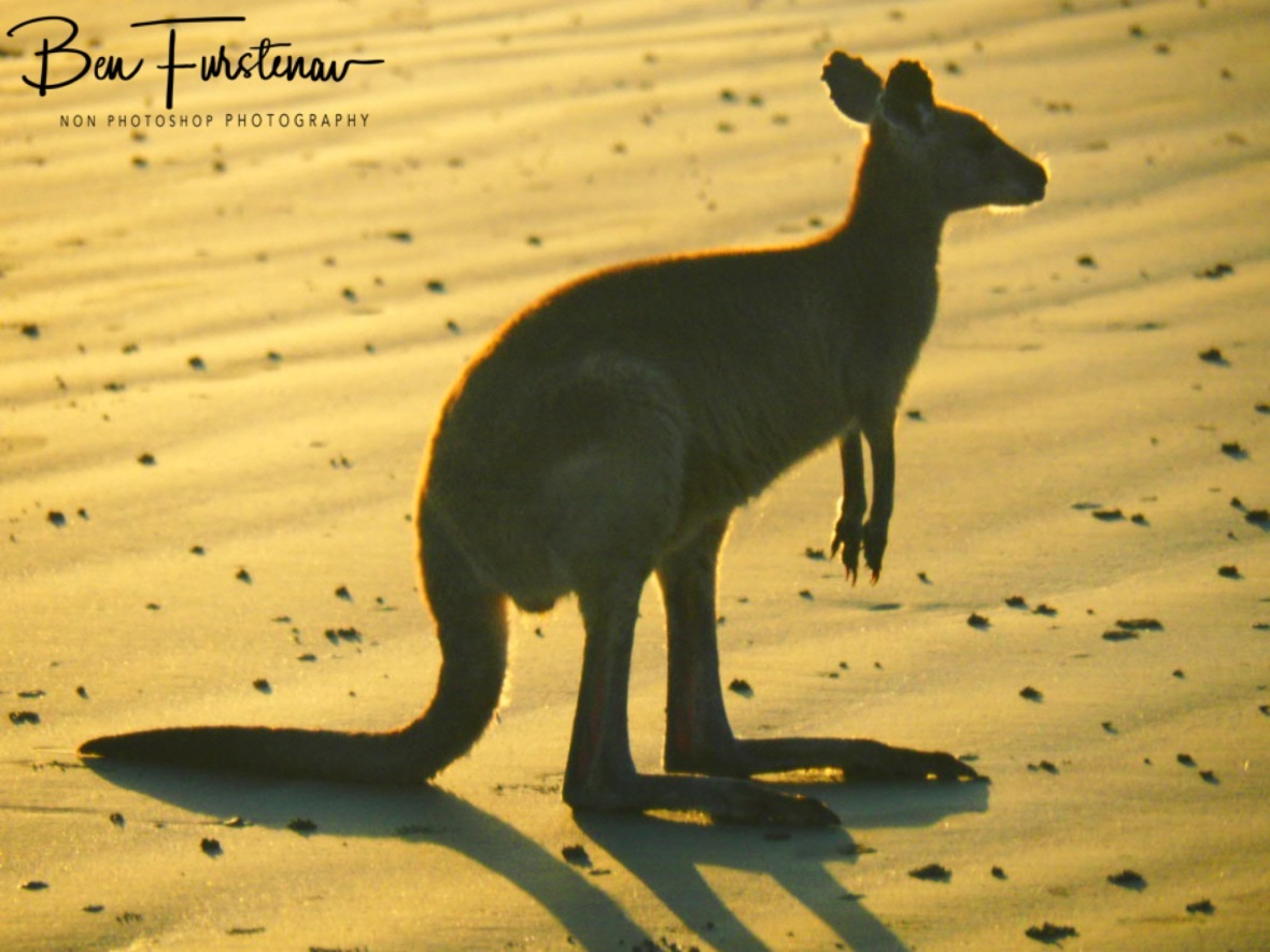 Show is almost over @ Cape Hillsborough, Tropical Northern Tropical, Australia