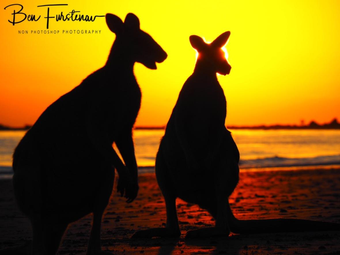 Staring at the sun @ Cape Hillsborough, Tropical Northern Tropical, Australia