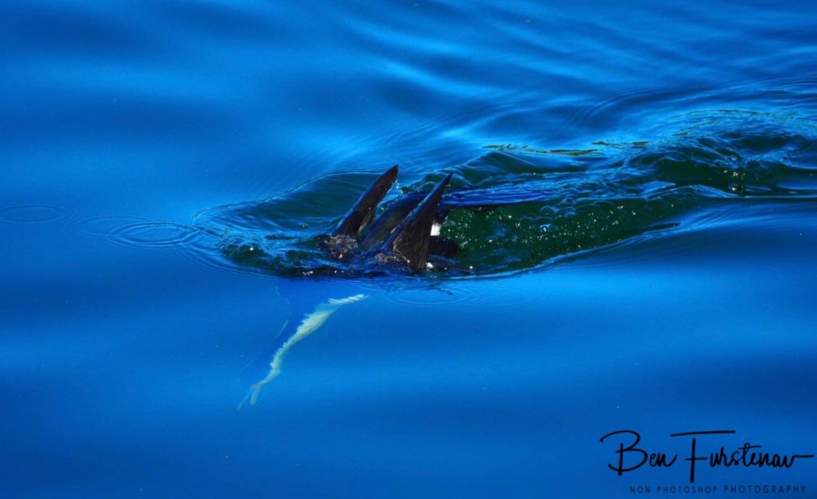 Submarine @ Crowdy Head, Northern New South Wales, Australia