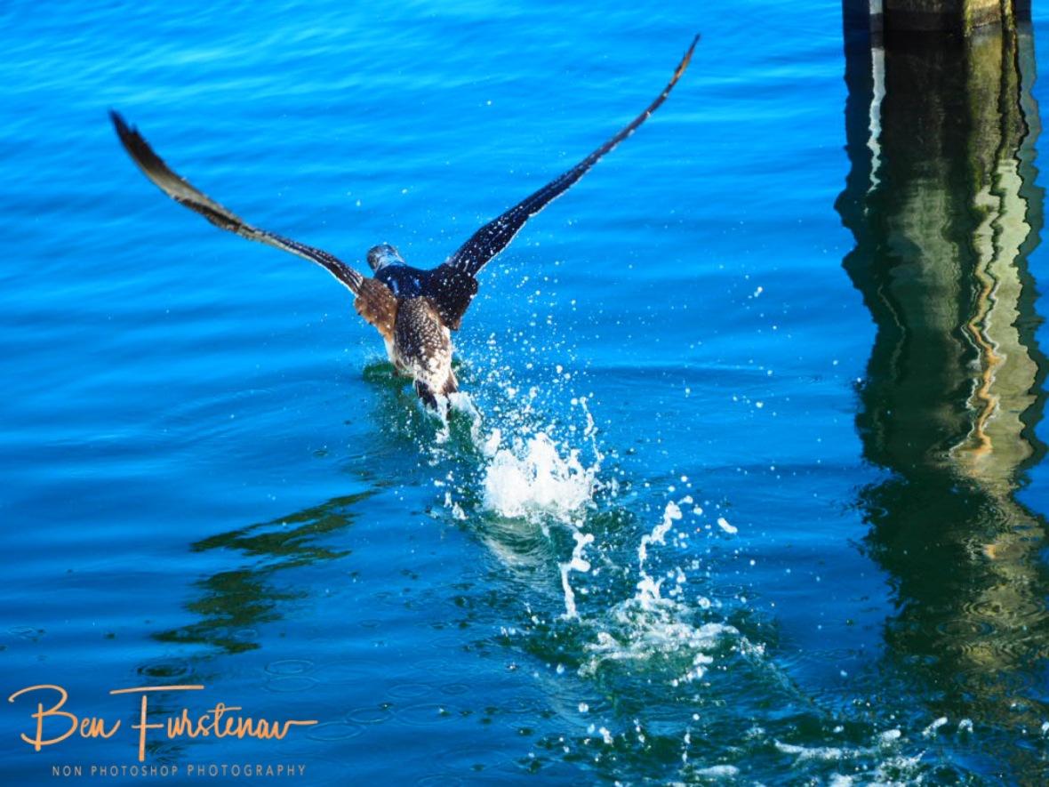 Jumbo taking off @ Crowdy Head, Northern New South Wales, Australia