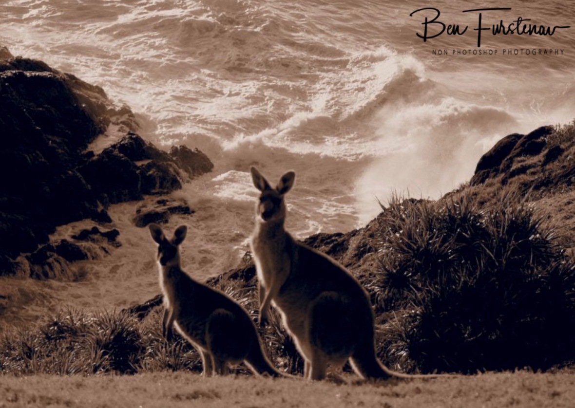 Mix and match in sepia  @ Hat Head, Northern New South Wales, Australia