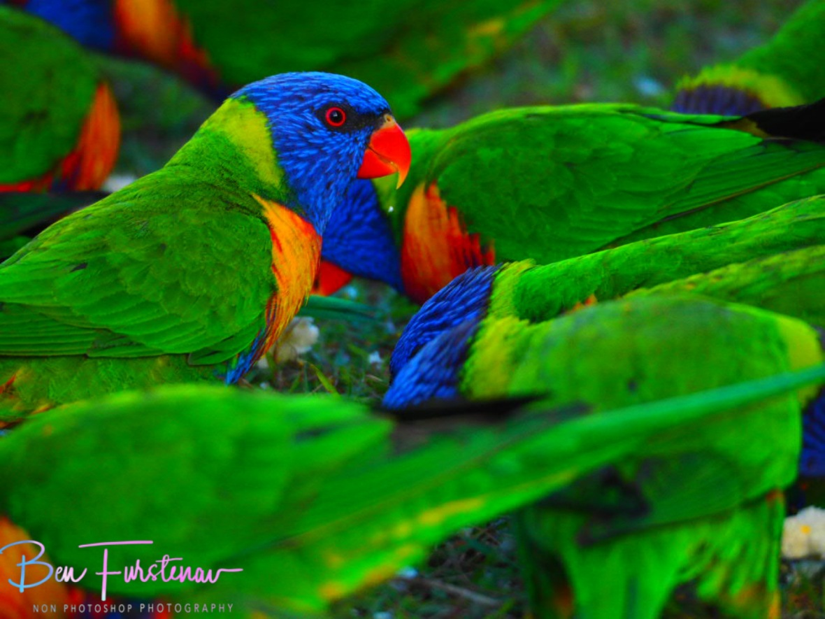 Colourful frenzy @ Hat Head, Northern New South Wales, Australia