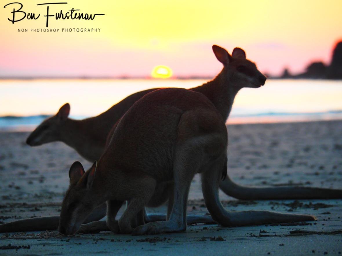 Family breakfast @ Cape Hillsborough, Tropical Northern Tropical, Australia