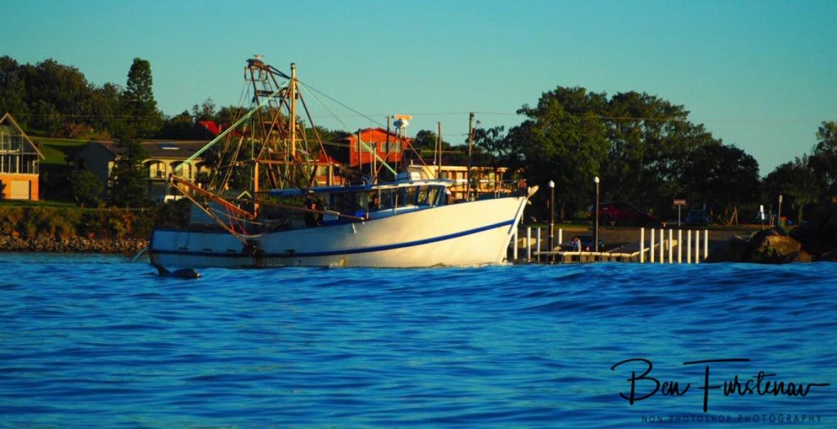 Dolphin patrol @ Crowdy Head, Northern New South Wales, Australia