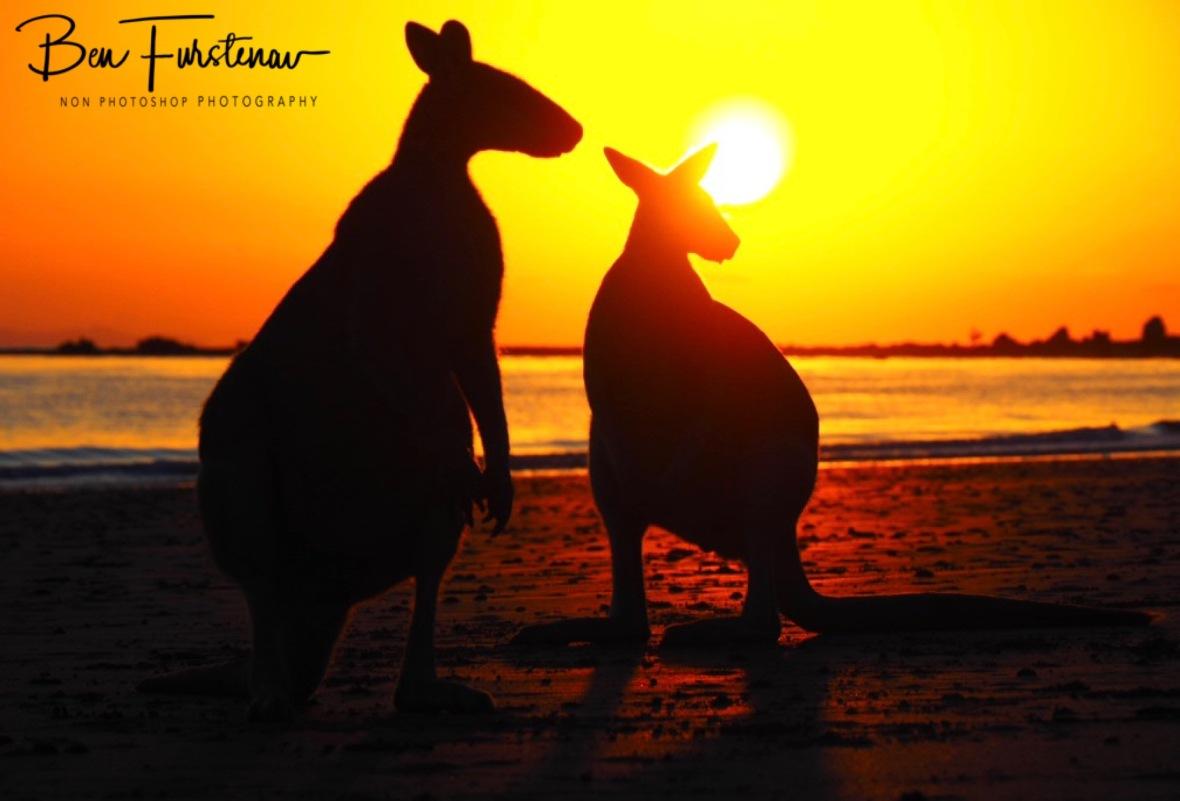 Sunrise @ Cape Hillsborough, Tropical Northern Tropical, Australia