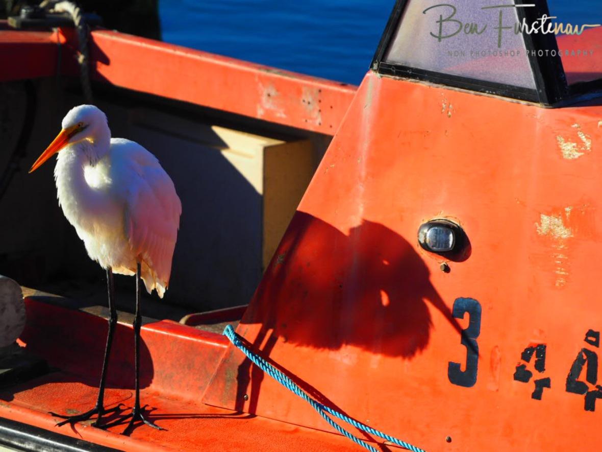 Heron retreat @ Crowdy Head, Northern New South Wales, Australia