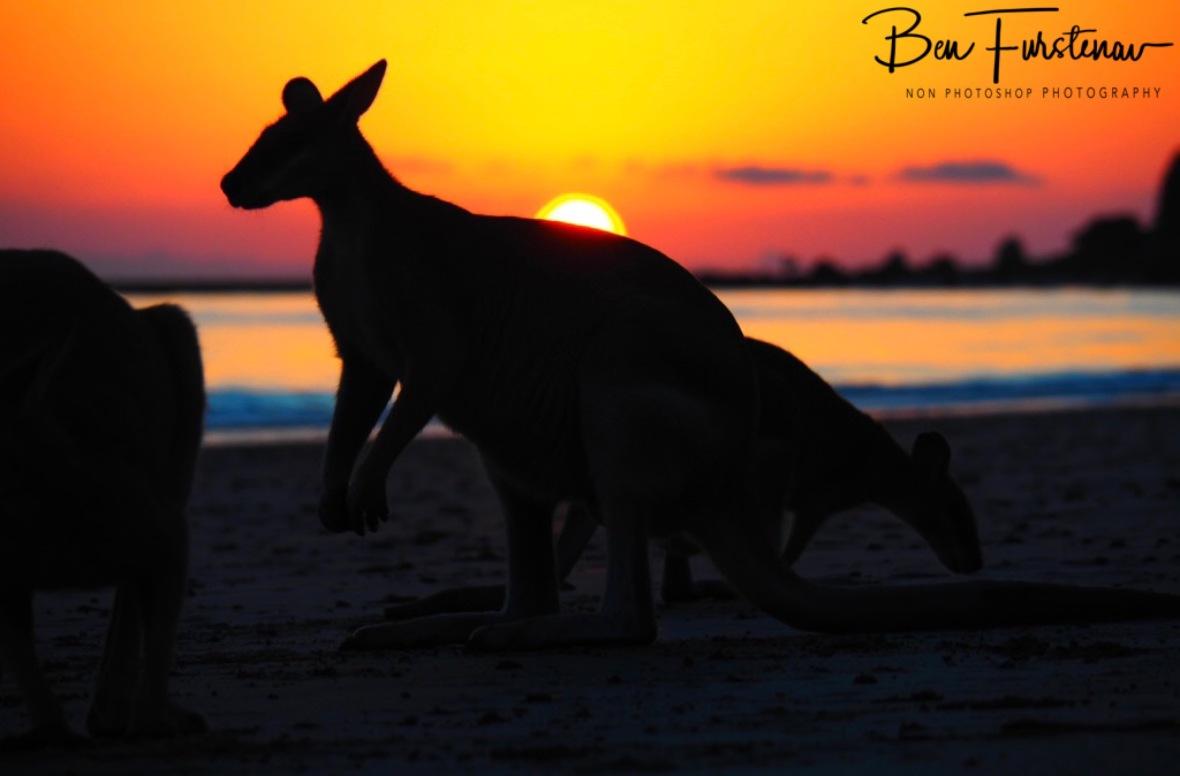 Silhouette  @ Cape Hillsborough, Tropical Northern Tropical, Australia