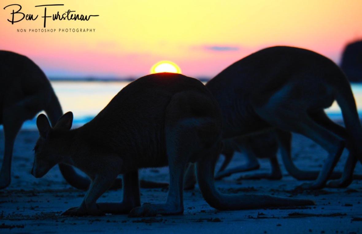 Crowded beach @ Cape Hillsborough, Tropical Northern Tropical, Australia
