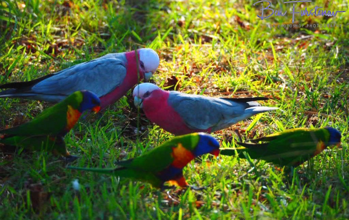 Colourful clowns @ Evans Head, Northern New South Wales, Australia
