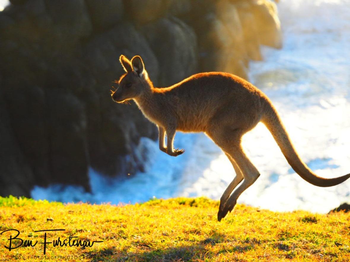 Jump around, jump around! @ Hat Head, Northern New South Wales, Australia