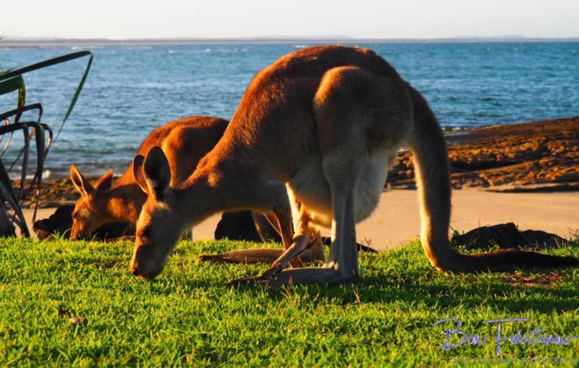 Graze lands @ Woody Head, Northern New South Wales, Australia