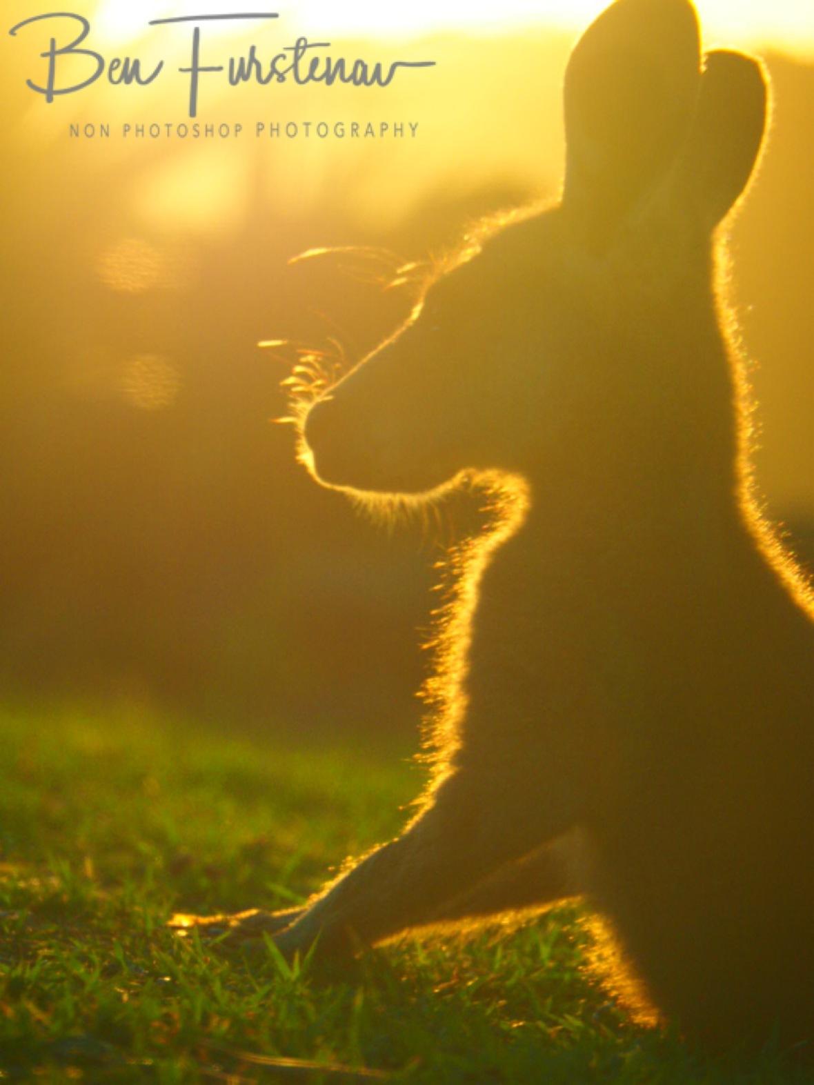 Fine print against setting sunshine @ Woody Head, Northern New South Wales, Australia