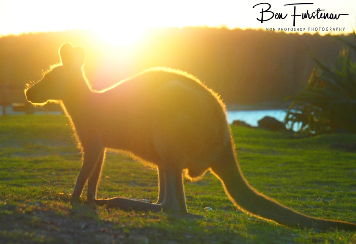 Turf life @ Woody Head, Northern New South Wales, Australia