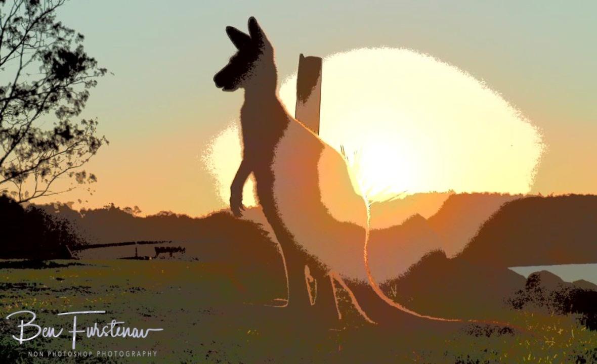 Watchful sun @ Woody Head, Northern New South Wales, Australia