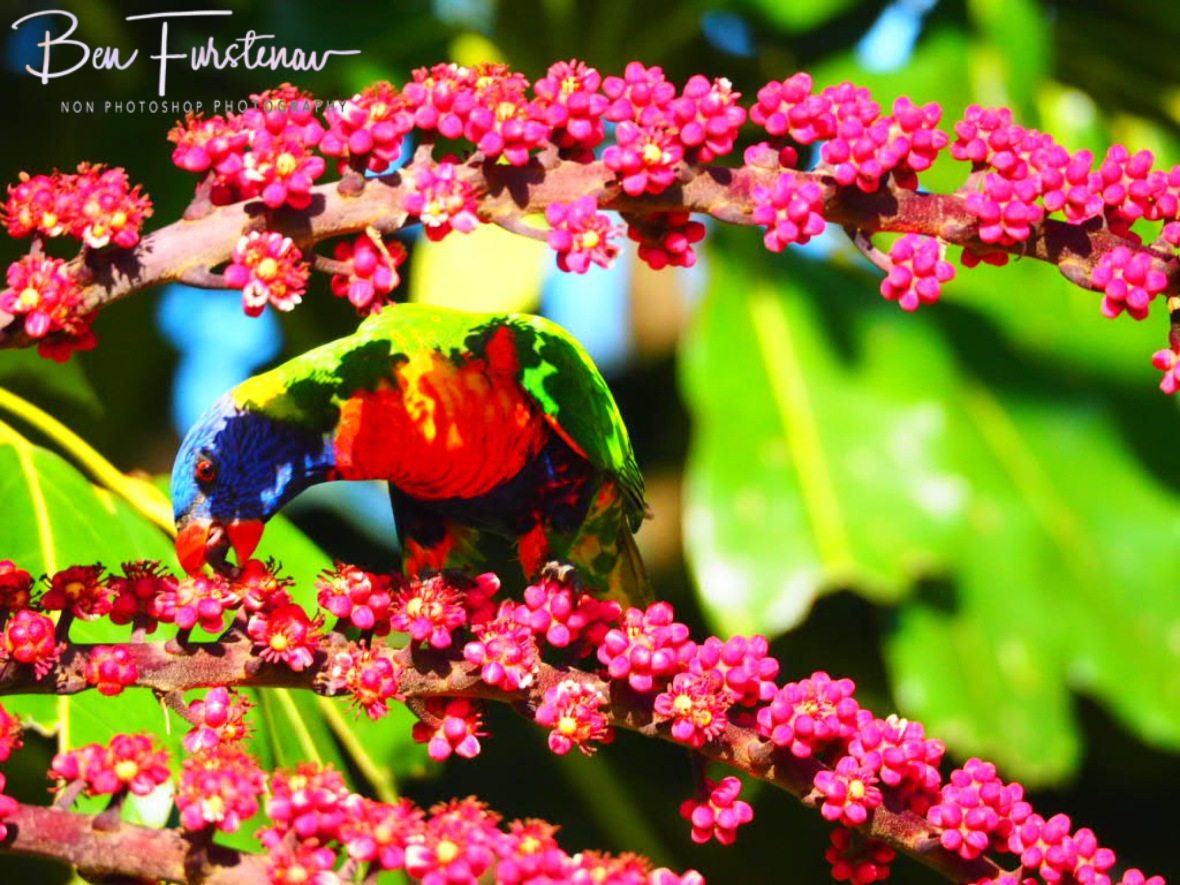 Colour bonanza @ Lismore, Northern New South Wales, Australia