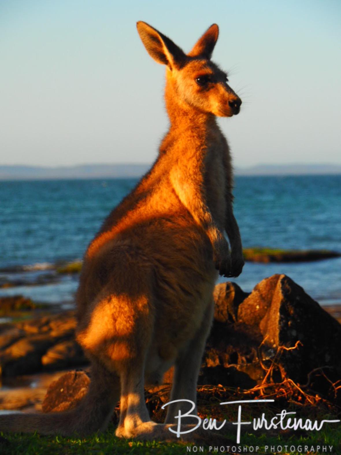 Curiosity @ Woody Head, Northern New South Wales, Australia